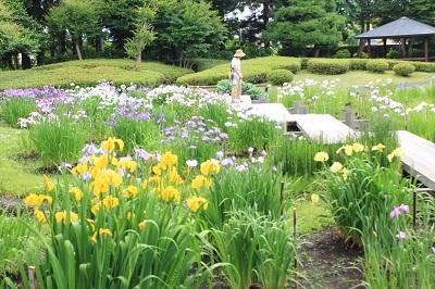 藤田記念庭園のハナショウブ_2021.06.24撮影_d0131668_17591691.jpg
