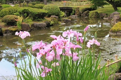 藤田記念庭園のハナショウブ_2021.06.24撮影_d0131668_17594035.jpg