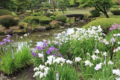 藤田記念庭園のハナショウブ_2021.06.24撮影_d0131668_18072113.jpg