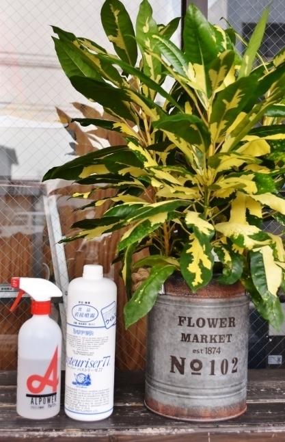 「残り1枚」  CHEF WEAR  PLANT柄_d0152280_19545879.jpg
