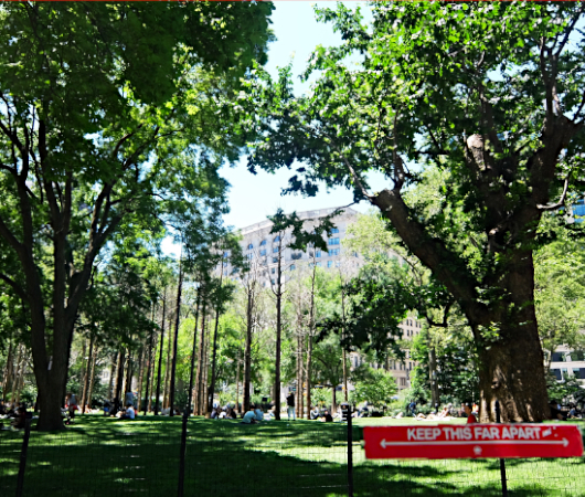 NYの公園にじわじわ系アート、『オバケの森』(Ghost Forest)登場中_b0007805_02434549.jpg