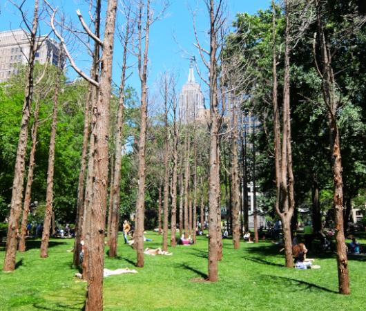NYの公園にじわじわ系アート、『オバケの森』(Ghost Forest)登場中_b0007805_02445703.jpg