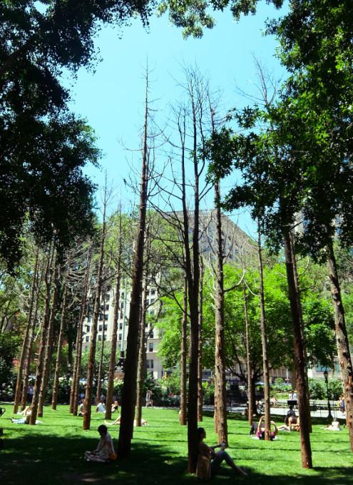 NYの公園にじわじわ系アート、『オバケの森』(Ghost Forest)登場中_b0007805_19311218.jpg