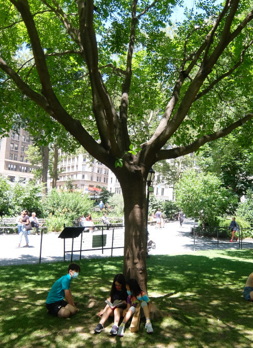 ニューヨークの公園の遊び方_b0007805_21301298.jpg