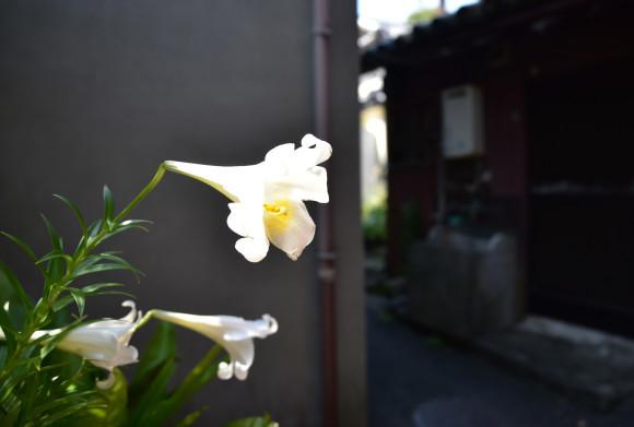 紀ノ国 雑賀崎散歩_e0164563_09573529.jpg