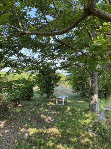 草刈り後の裏山 〜梅雨の晴れ間に〜_c0334574_05354108.jpeg