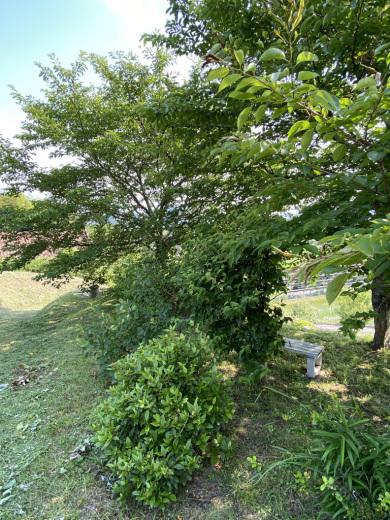 草刈り後の裏山 〜梅雨の晴れ間に〜_c0334574_05372072.jpeg