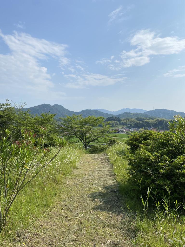 草刈り後の裏山 〜梅雨の晴れ間に〜_c0334574_05411105.jpeg