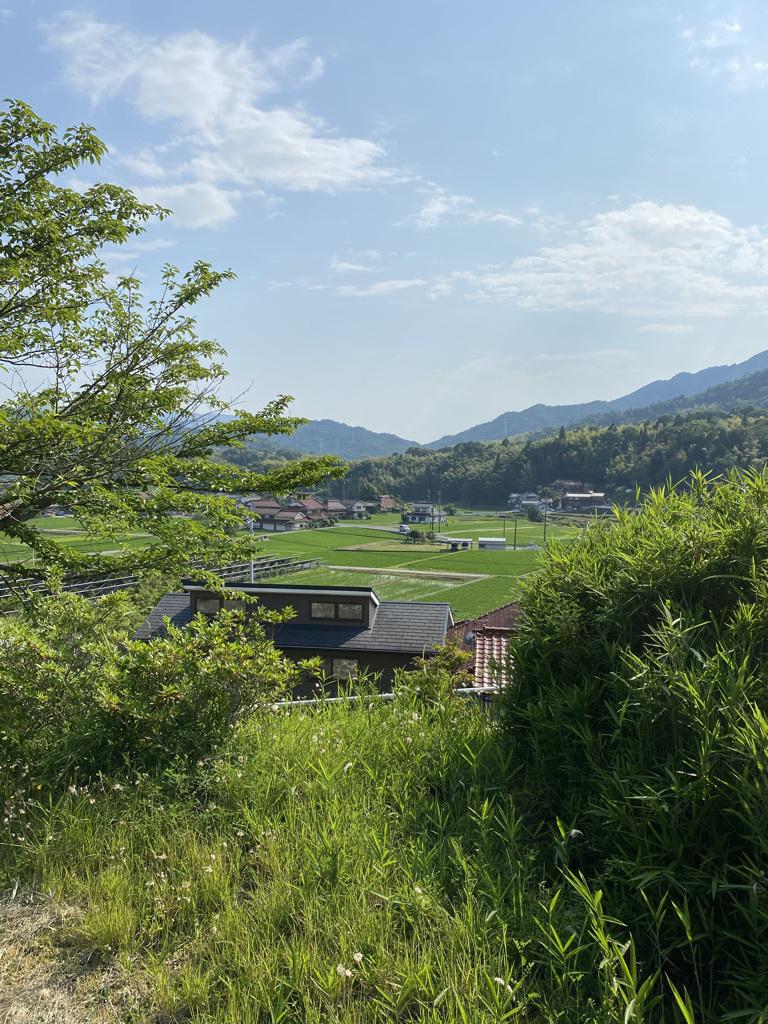 草刈り後の裏山 〜梅雨の晴れ間に〜_c0334574_05424310.jpeg