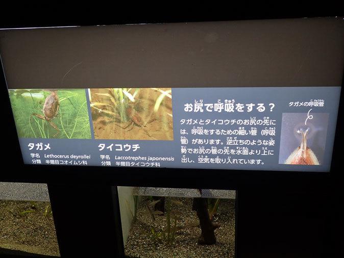 プチ・リニューアルな水生物園~かさなるタイコウチ(井の頭自然文化園 March 2020)_b0355317_12500493.jpg