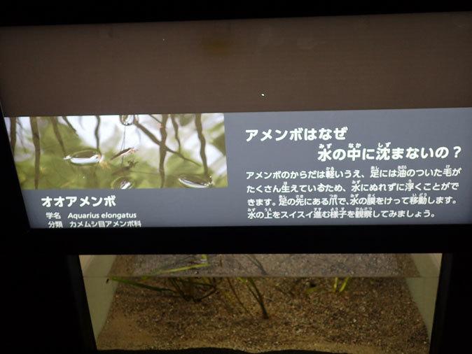 プチ・リニューアルな水生物園~かさなるタイコウチ(井の頭自然文化園 March 2020)_b0355317_12532175.jpg