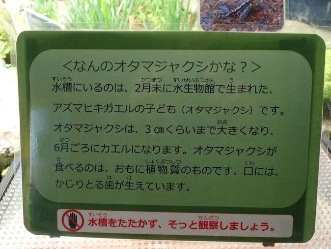 プチ・リニューアルな水生物園~かさなるタイコウチ(井の頭自然文化園 March 2020)_b0355317_12573736.jpg