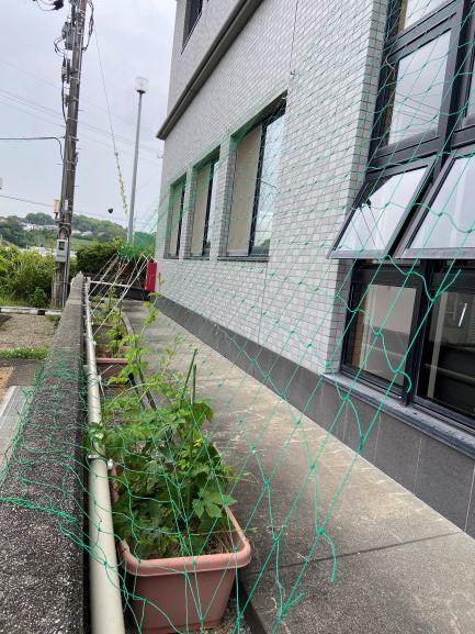 緑のカーテン始めました🍀_c0219018_14441446.jpg