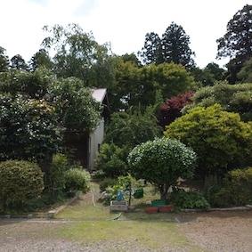 庭の緑_e0246300_14334158.jpg