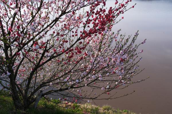 日本風景写真協会(JNP)presents「ニッポン津々浦々、撮影地案内!」(福井編)3/3回_c0142549_10434110.jpg
