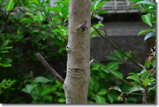 6月の庭_d0089358_18095793.jpg