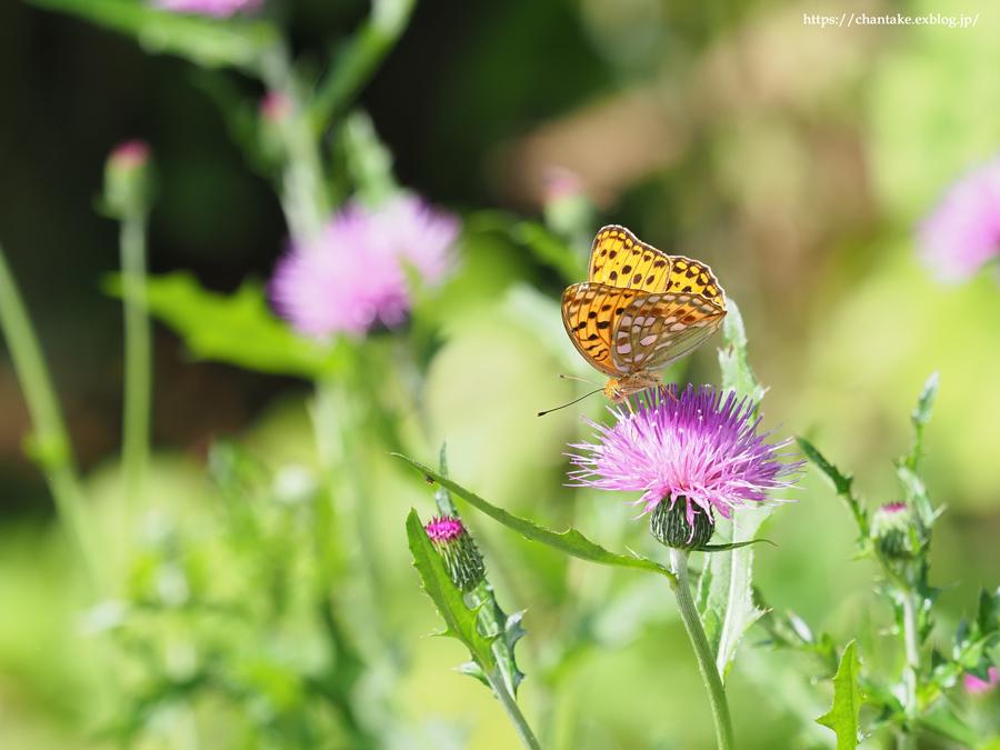 里山の蝶たち 2021_c0189013_01044028.jpg