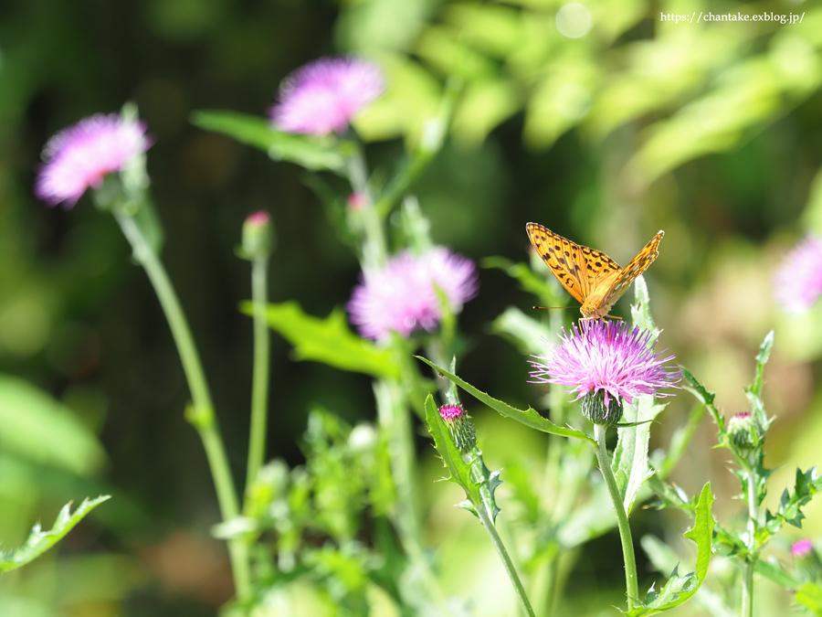 里山の蝶たち 2021_c0189013_01071669.jpg