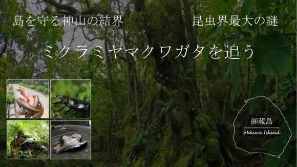 昆虫界最大の謎を追って!御蔵島, 神山の結界をまたぐ ~ミクラミヤマクワガタ~_a0386621_17463335.jpg