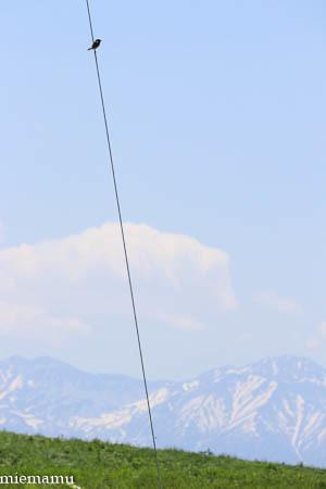 就実の丘のノビタキさん~6月_d0340565_19424090.jpg