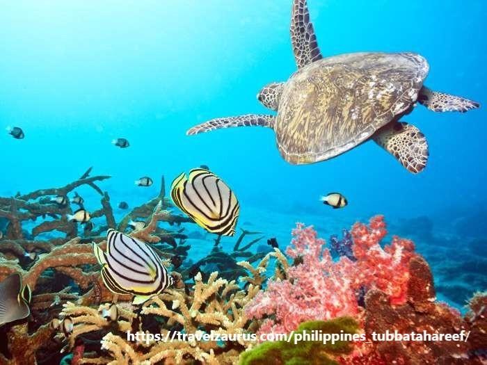 【フィリピントリビア】海の楽園・トゥバタハ岩礁自然公園_d0146933_16544884.jpg