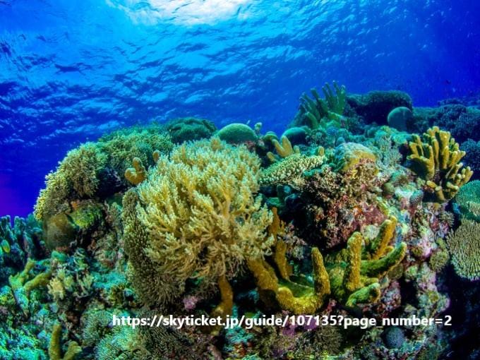 【フィリピントリビア】海の楽園・トゥバタハ岩礁自然公園_d0146933_16545283.jpg