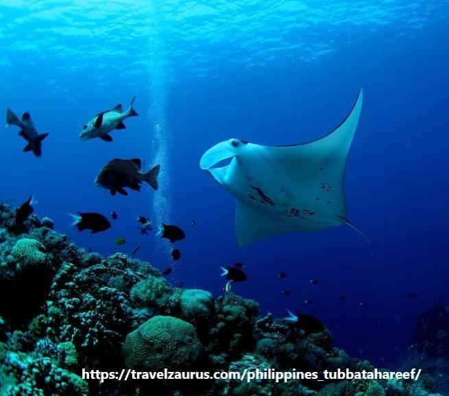 【フィリピントリビア】海の楽園・トゥバタハ岩礁自然公園_d0146933_16545500.jpg
