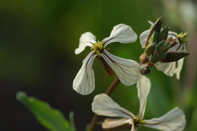 わが菜園に咲く花たち_d0244364_17294256.jpg