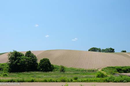 静かな丘の景色~6月の美瑛_d0340565_19502220.jpg