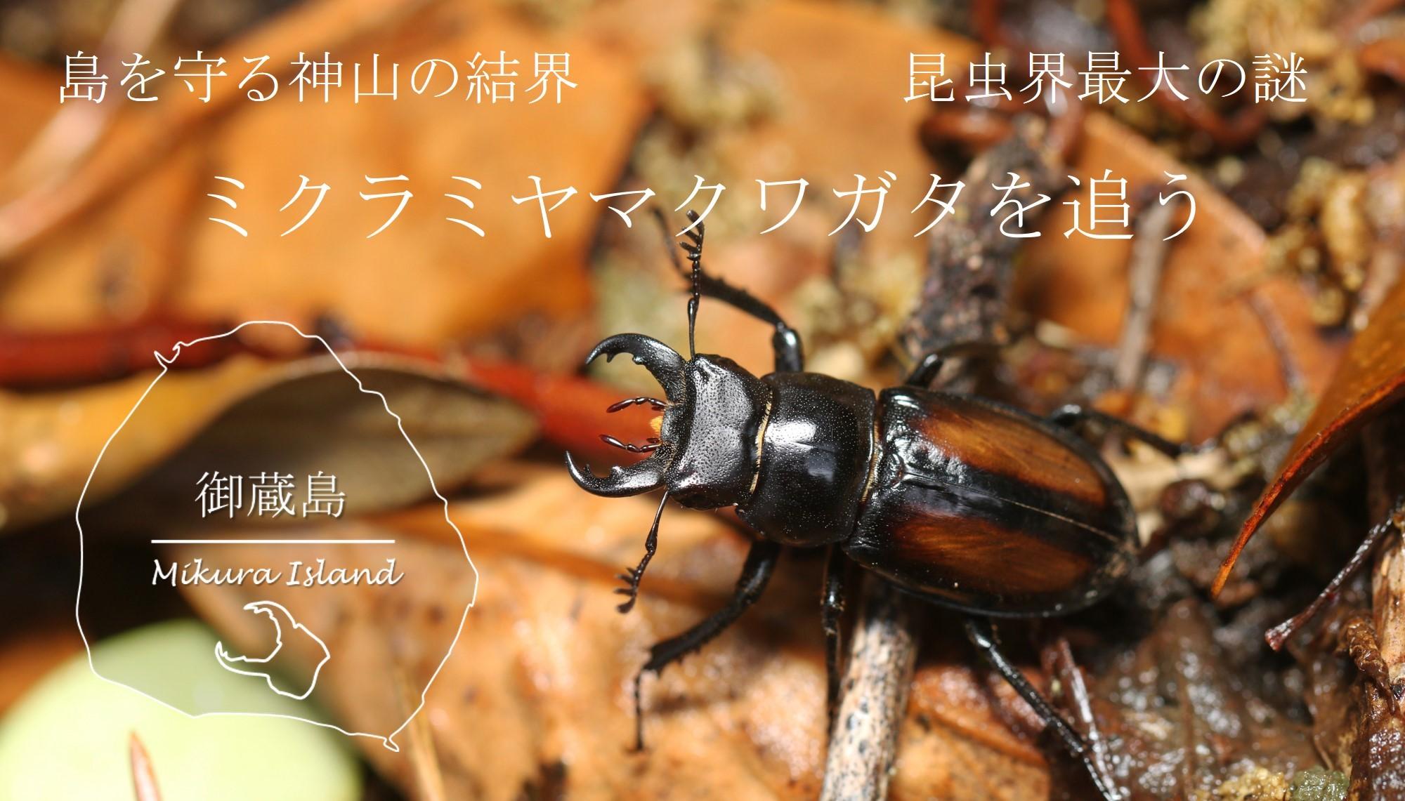 昆虫界最大の謎を追って!御蔵島, 神山の結界をまたぐ ~ミクラミヤマクワガタ~_a0386621_15074808.jpg