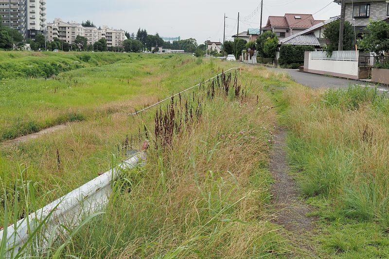 小畔川便り(雨の後で:2021/6/23)_f0031682_10342931.jpg