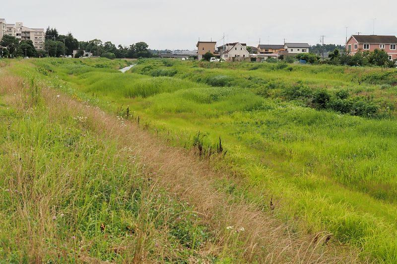 小畔川便り(雨の後で:2021/6/23)_f0031682_10343004.jpg