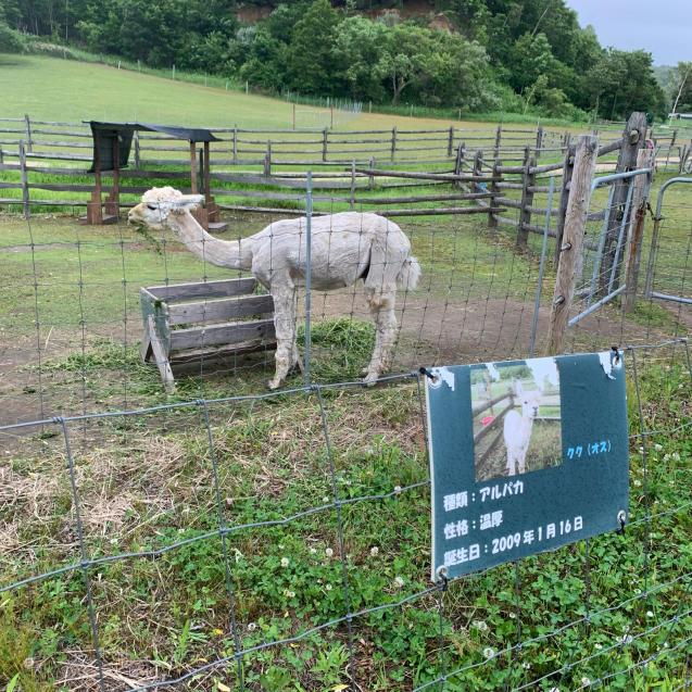 ひとり女子自走キャンプinえこりん村~Sheep Sheep Camping Field~_d0197762_14231566.jpg