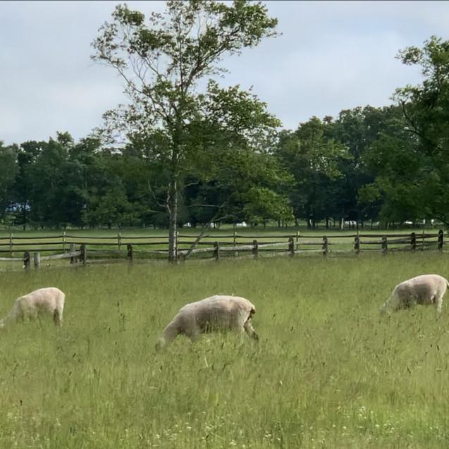 ひとり女子自走キャンプinえこりん村~Sheep Sheep Camping Field~_d0197762_17513573.jpg