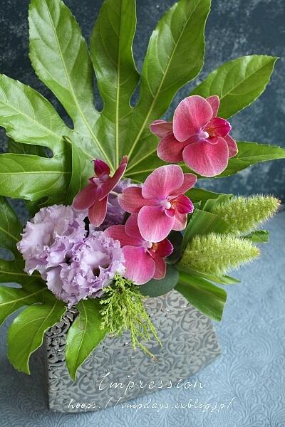 定期装花から ミニファノレプシス_a0085317_15330563.jpg