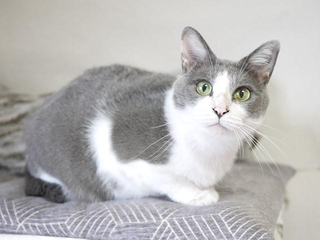 猫のお留守番 赤福くん編。_a0143140_22571214.jpg