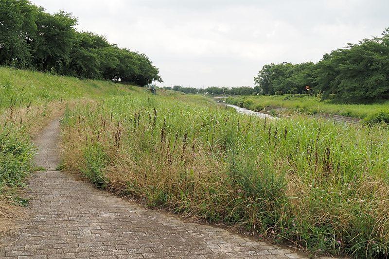 小畔川便り(草刈り開始:2021/6/24)_f0031682_10002031.jpg
