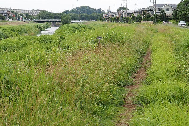 小畔川便り(草刈り開始:2021/6/24)_f0031682_10012774.jpg