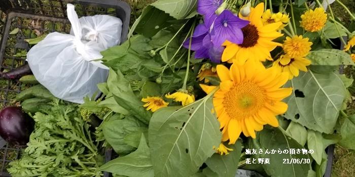 畑へ、 健康診断、 6月の満月、 叔母の事_c0051105_22130504.jpg