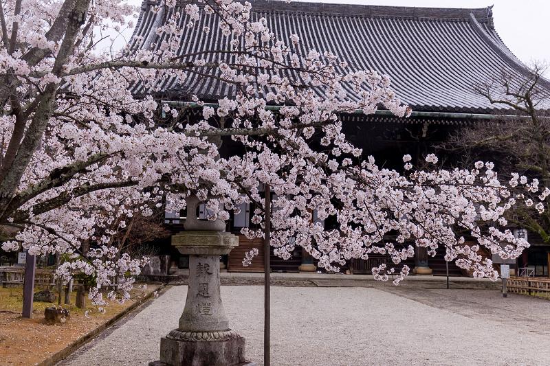 2021桜咲く京都  春雨の真如堂_f0155048_22481748.jpg