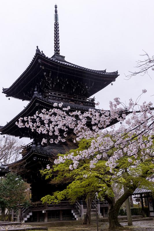 2021桜咲く京都  春雨の真如堂_f0155048_22483497.jpg