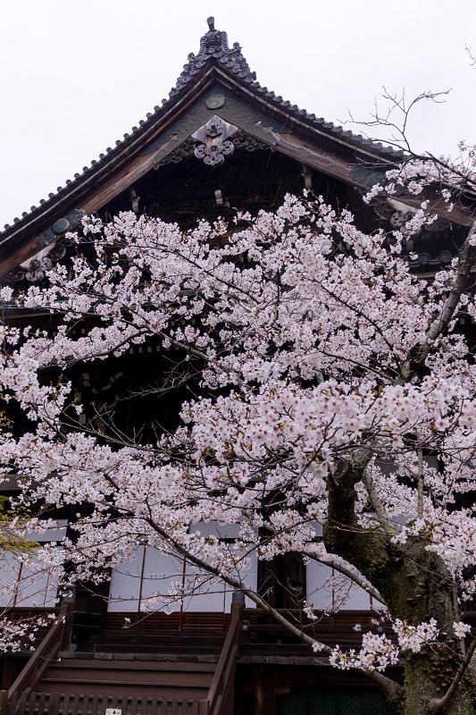 2021桜咲く京都  春雨の真如堂_f0155048_22485470.jpg