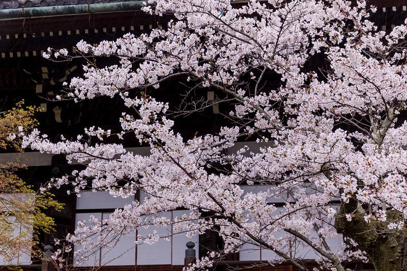 2021桜咲く京都  春雨の真如堂_f0155048_22485935.jpg