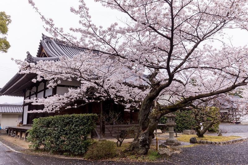 2021桜咲く京都  春雨の真如堂_f0155048_22494606.jpg