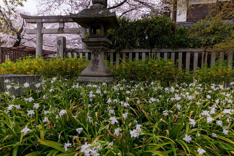 2021桜咲く京都  春雨の真如堂_f0155048_22513435.jpg