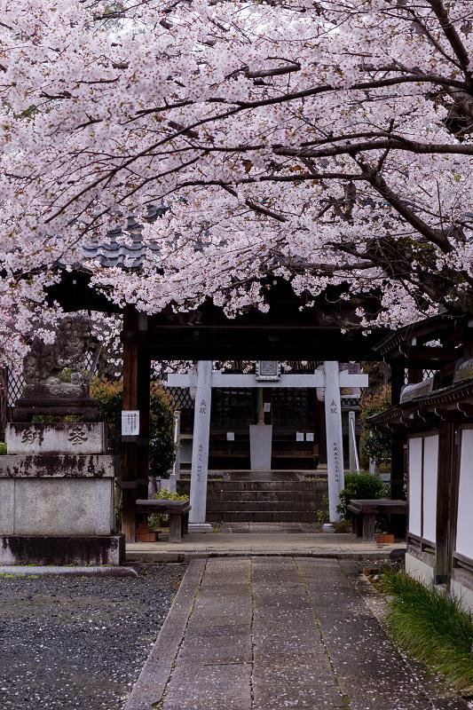2021桜咲く京都  春雨の真如堂_f0155048_22521102.jpg