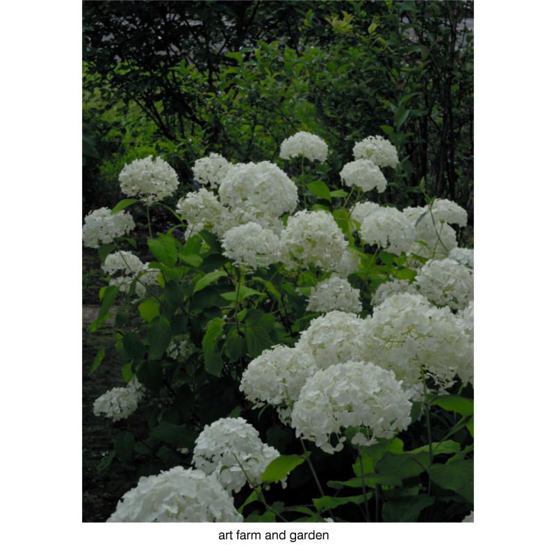 7月の庭/art farm & garden_b0290469_21293931.jpg