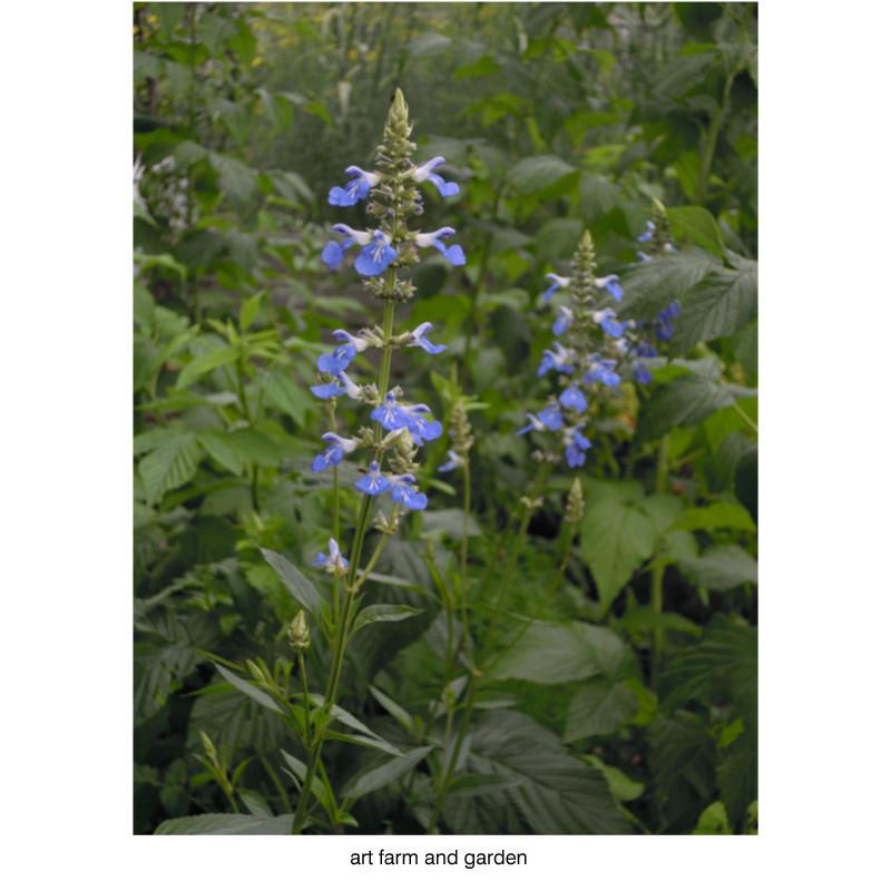 7月の庭/art farm & garden_b0290469_21304115.jpg