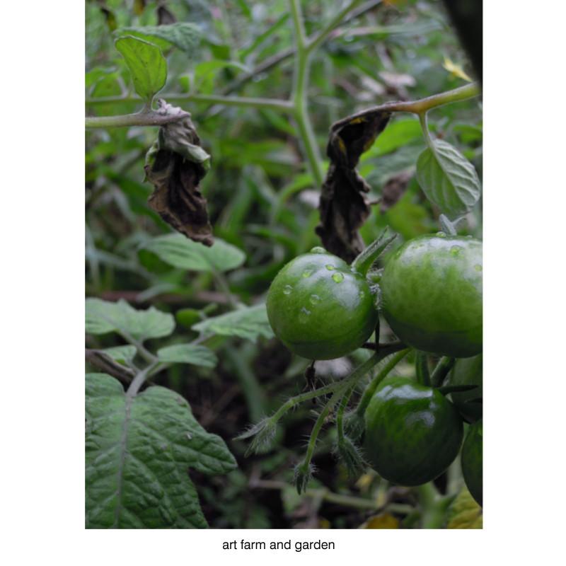 7月の庭/art farm & garden_b0290469_21311335.jpg