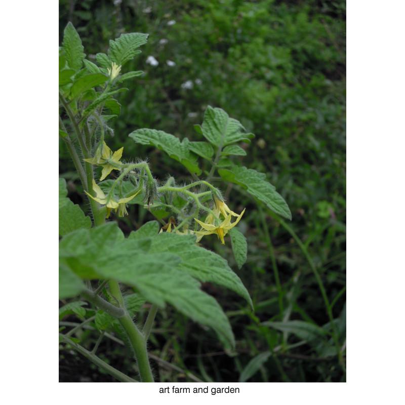 7月の庭/art farm & garden_b0290469_21313242.jpg